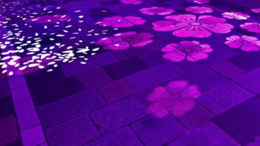 桜のライト