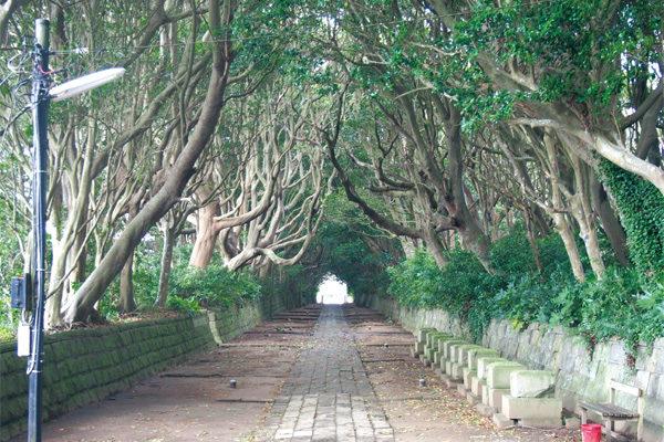 樹木のトンネル